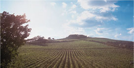 picture of winemaking vineyard